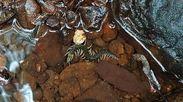 渓流の水底に身を隠そうとするリュウジンオオムカデ(佐藤文保、久米島ホタル館・館長、撮影)
