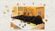 黒猫だけの保護猫カフェねこびやか1