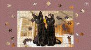 黒猫だけの保護猫カフェねこびやか2