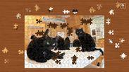 黒猫だけの保護猫カフェねこびやか3