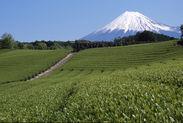 富士山麓の茶園