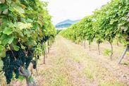 手仕事で丁寧に作られる葡萄