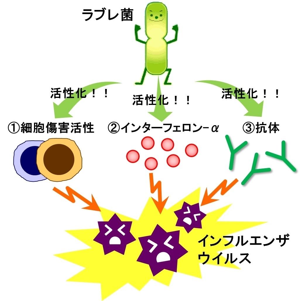 バチルス 菌 ラクト