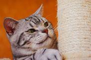 猫と住まいの関係は…