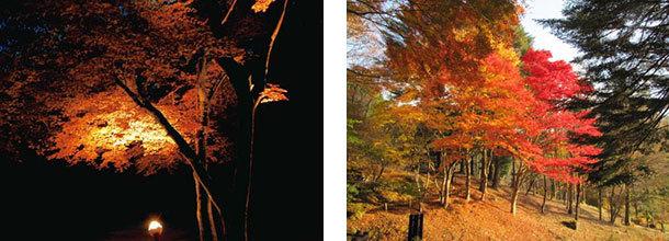 [写真左]紅葉ライトアップ(イメージ) / [写真右]園内の紅葉