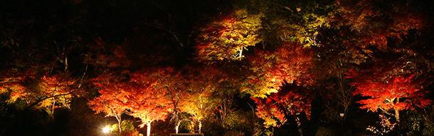 紅葉ライトアップイメージ