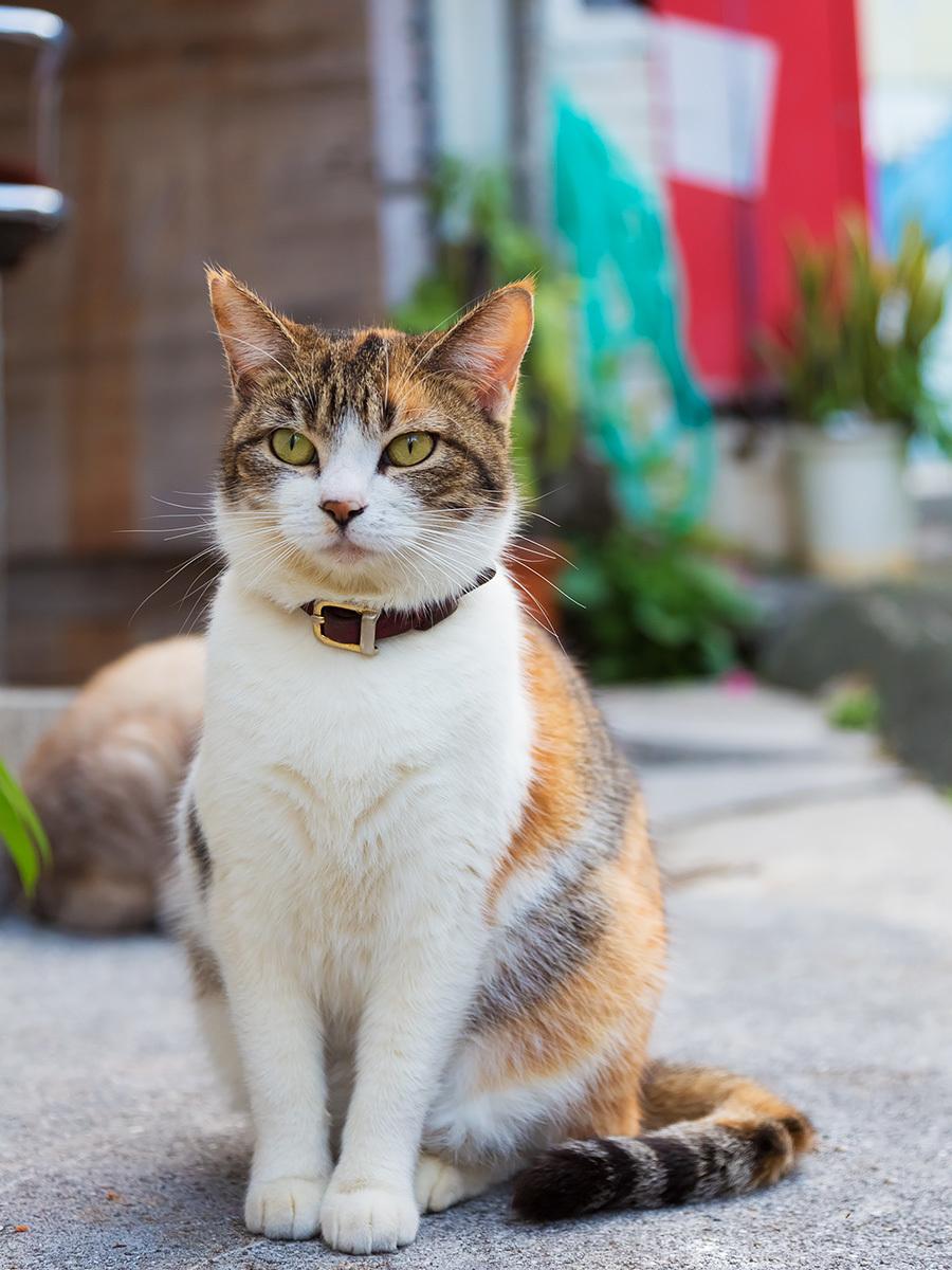 野良猫の動物壁紙