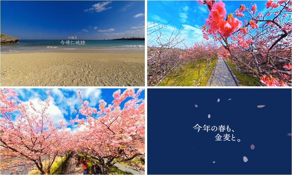 日本初。デスクが桜の特等席!? 360度で満開の桜が楽しめる金麦「桜咲く 春の金麦」